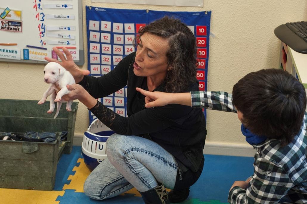 Estudiando a los cachorros